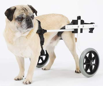 back leg support wheelchairs for dog