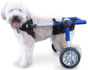 white Dachshund dog wheelchair