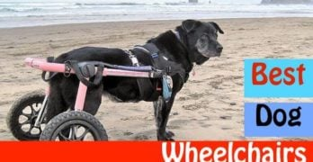 black dog best dog wheelchair