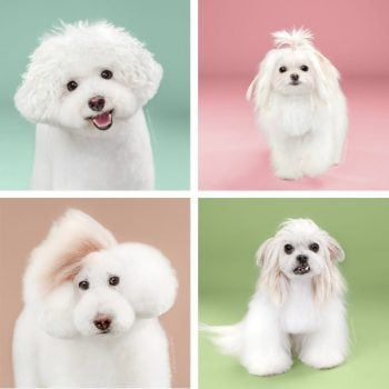 dog's haircut before & after
