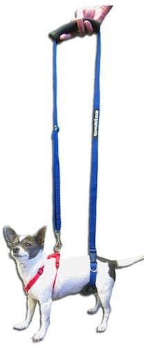 Dog Support Harness for dachshunds