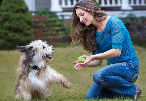 petsafe dog playing