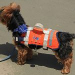 emotional support animal vest