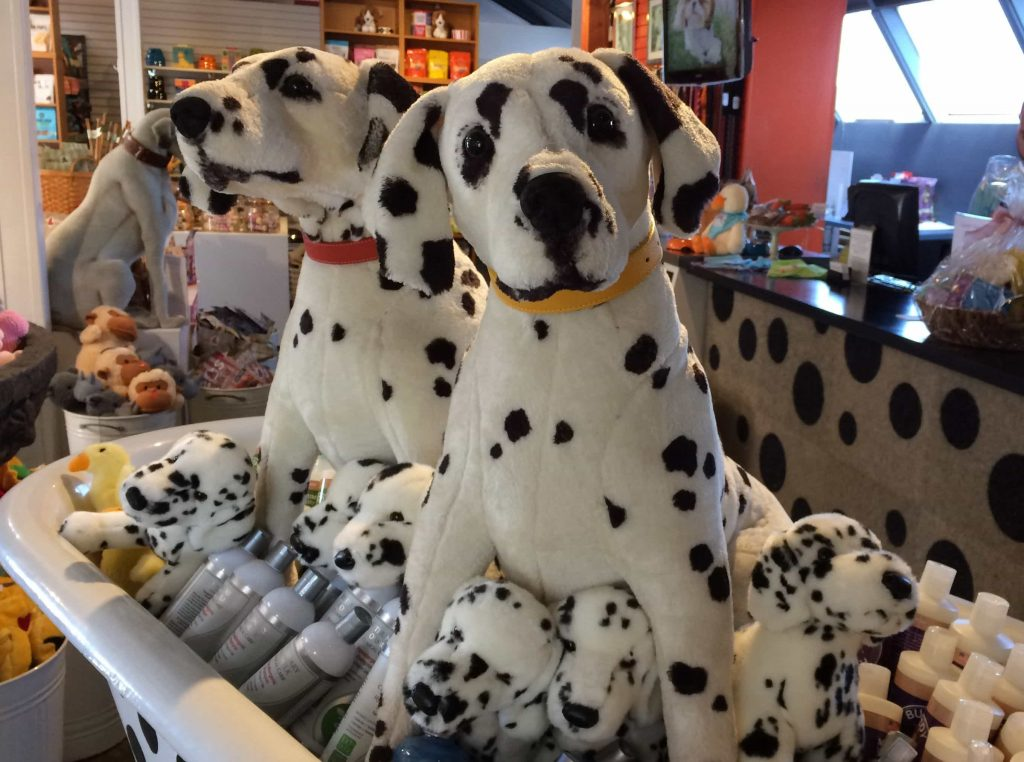 shopping pet products