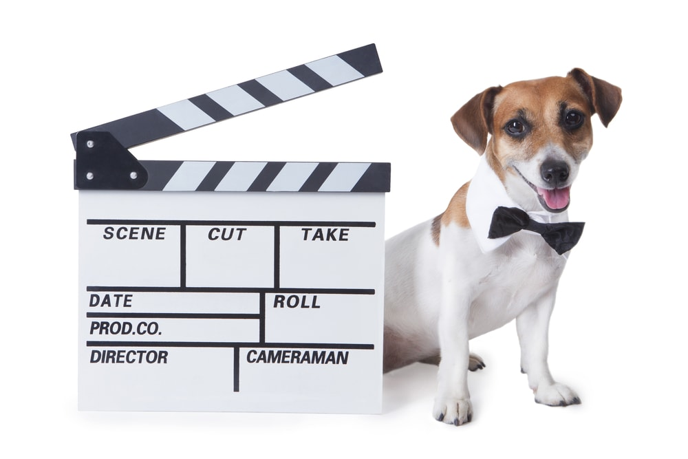 Famous Dog Facts