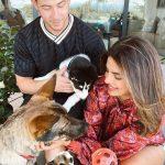 Nick Jonas and Priyanka Chopra Dog