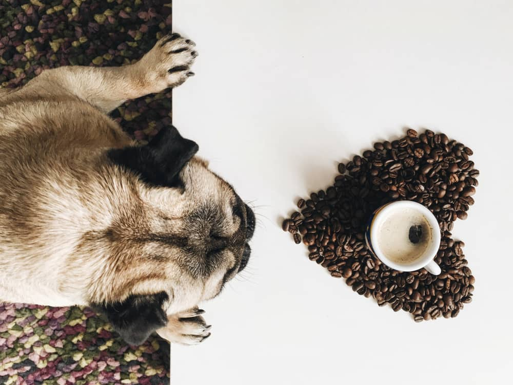 Dog Names with Coffee Themes