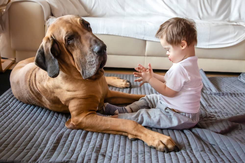 Down Syndrome Symptoms for Dogs