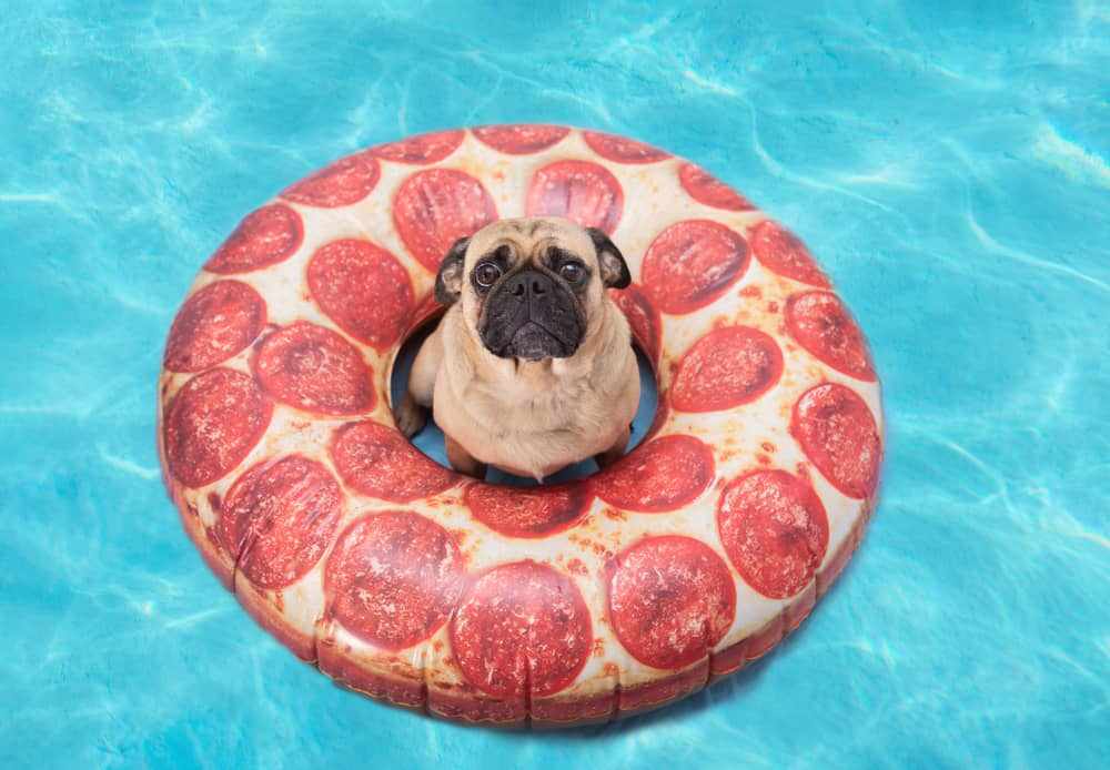 Issues with Dogs and Pepperoni