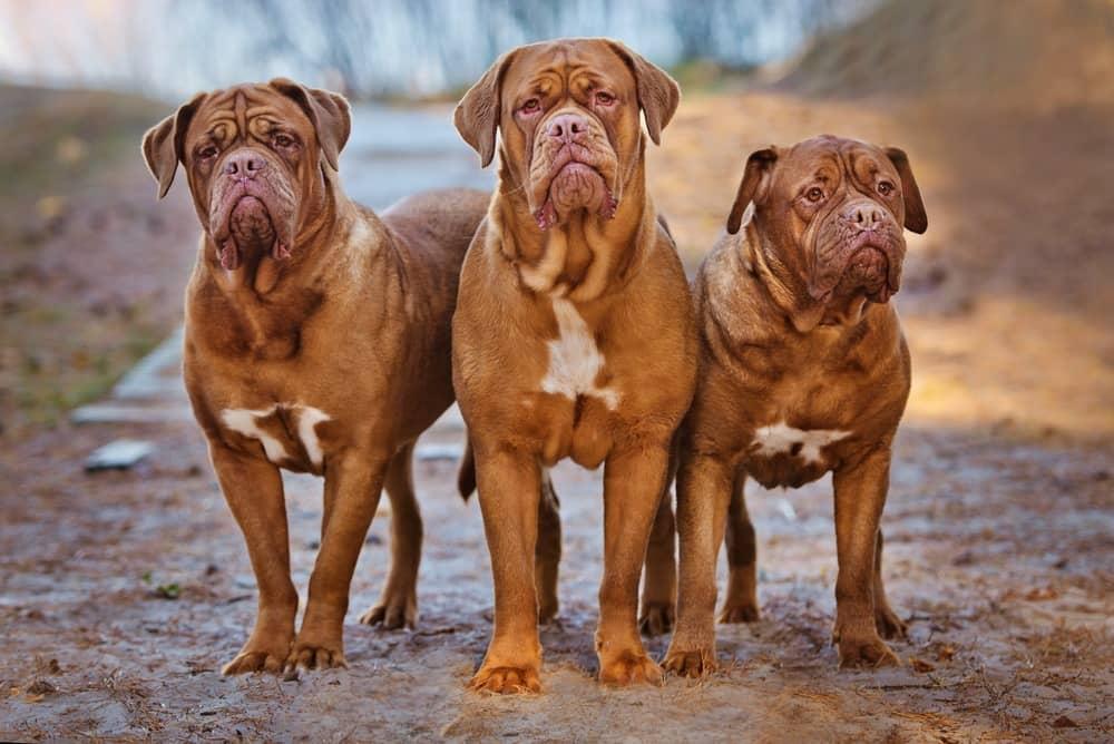 family big breeds