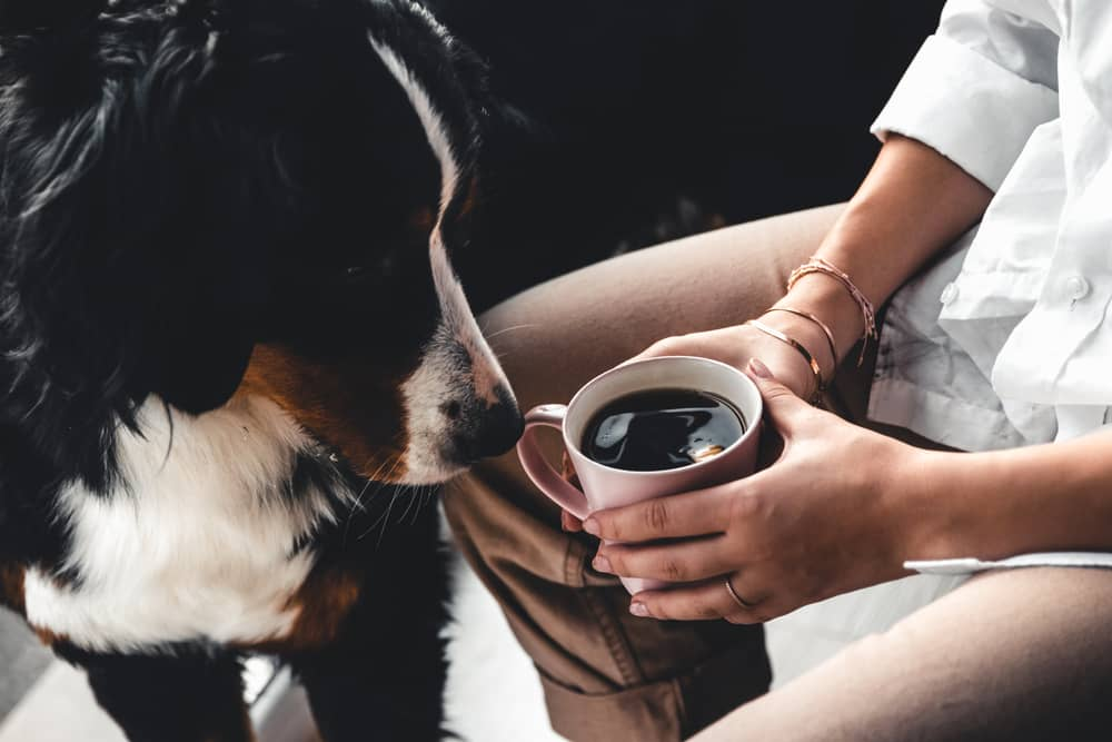 Male Dog Names Inspired by Coffee