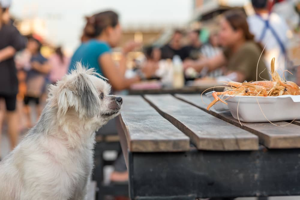Shrimp Shells & Shrimps and the Problem with Dogs