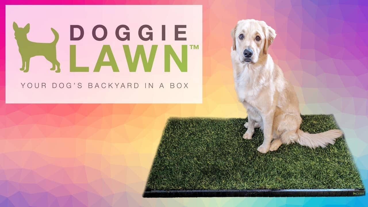 What is Doggie Lawn