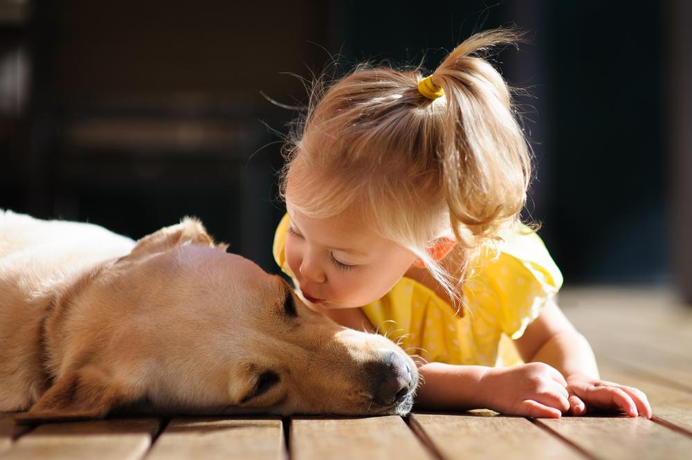labradors love kids